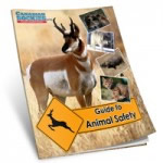 Guide to Animal Safety