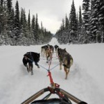 Sled dog's provide a unique way to get married in the Canadian Rockies.