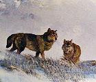Wolf - Milton Achtimickuk