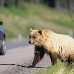 Keep your eyes open for grizzlies while hiking.