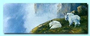 Mountain goats © Milton Achtymichuk