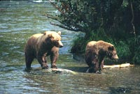 Knowing about bears will make your trip safer and more enjoyable.