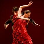 The Flamenco in full flow.