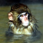 If a monkey can take a spa, then why can't you?!