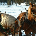 Your horse and sleigh await you in Banff.