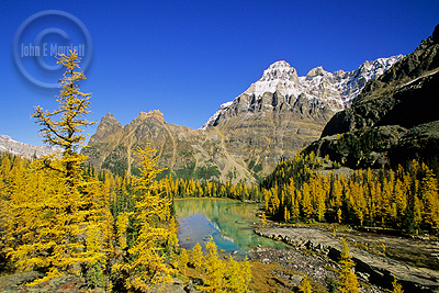 Opabin Plateau in Lake O'Hara, Yoho National Park